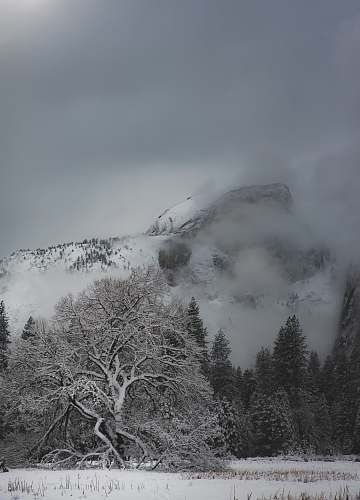 yosemite valley landscape photo of mountain and tree covered with snow moody